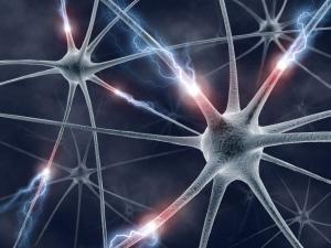Red neuronal biológica
